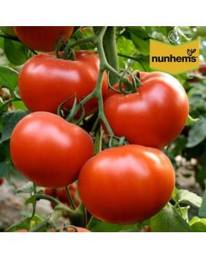 Pomidor AXIOM  100 nasion...