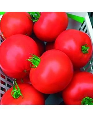 Pomidor BRILLANTE  250...