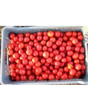 Pomidor ALBAROSSA 5.000...