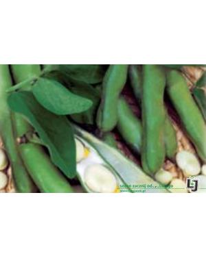 Bób BIZON 5 kg nasion ZW  ST