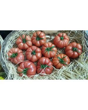 Pomidor CASSAROSA (HOBBY) 50 nasion ZW  ST