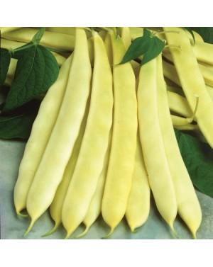 Fasola żółta płasko-strąkowa, typu Romano. Odporna na wirusa mozaiki fasoli, antraknozę oraz bakteriozę obwódkową.