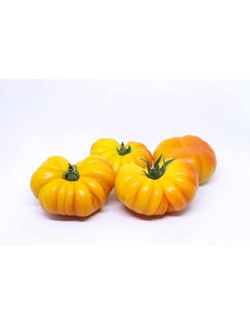 Pomidor LACITRINE 100 NASION
