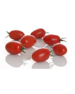 Pomidor OCEANO 250 NASION