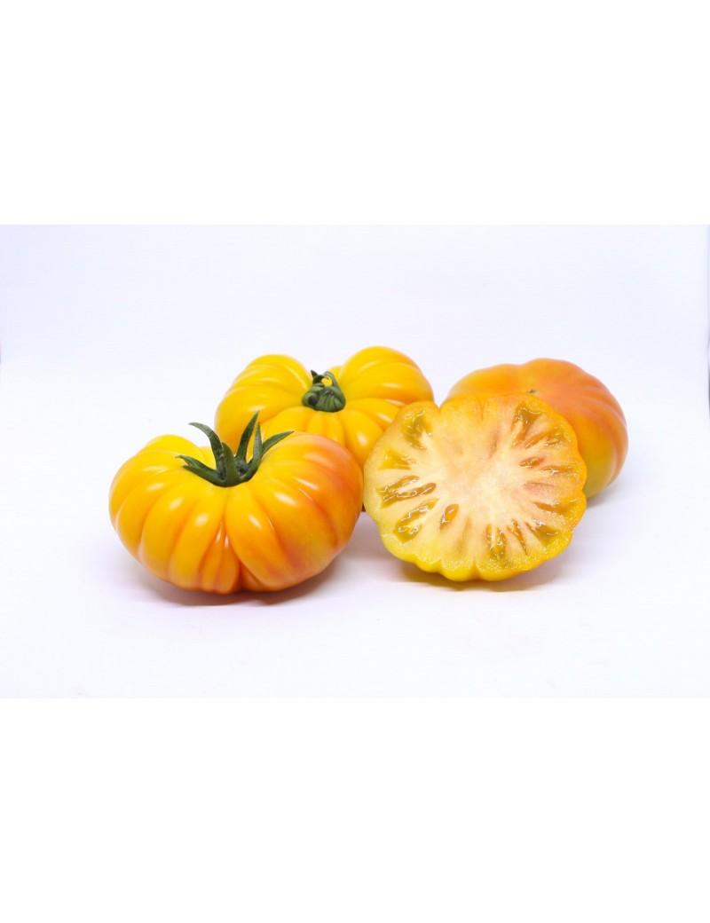 Pomidor Lacitrine 50 nasion