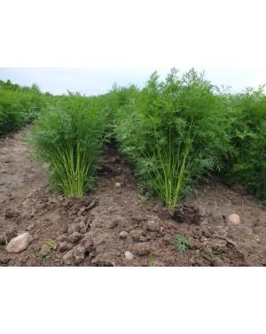 Koper CERES 5 kg nasion ZW