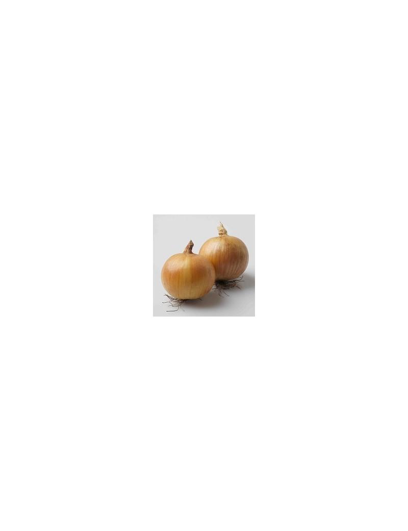 Cebula WOLF- żółta 250.000 nasion ZW
