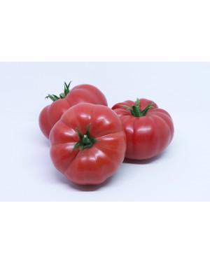Pomidor SONAROSA 500 nasion ZW