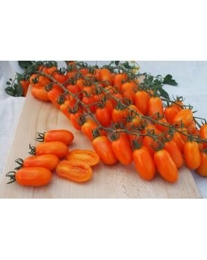 Pomidor ODAT 100 nasion ZW