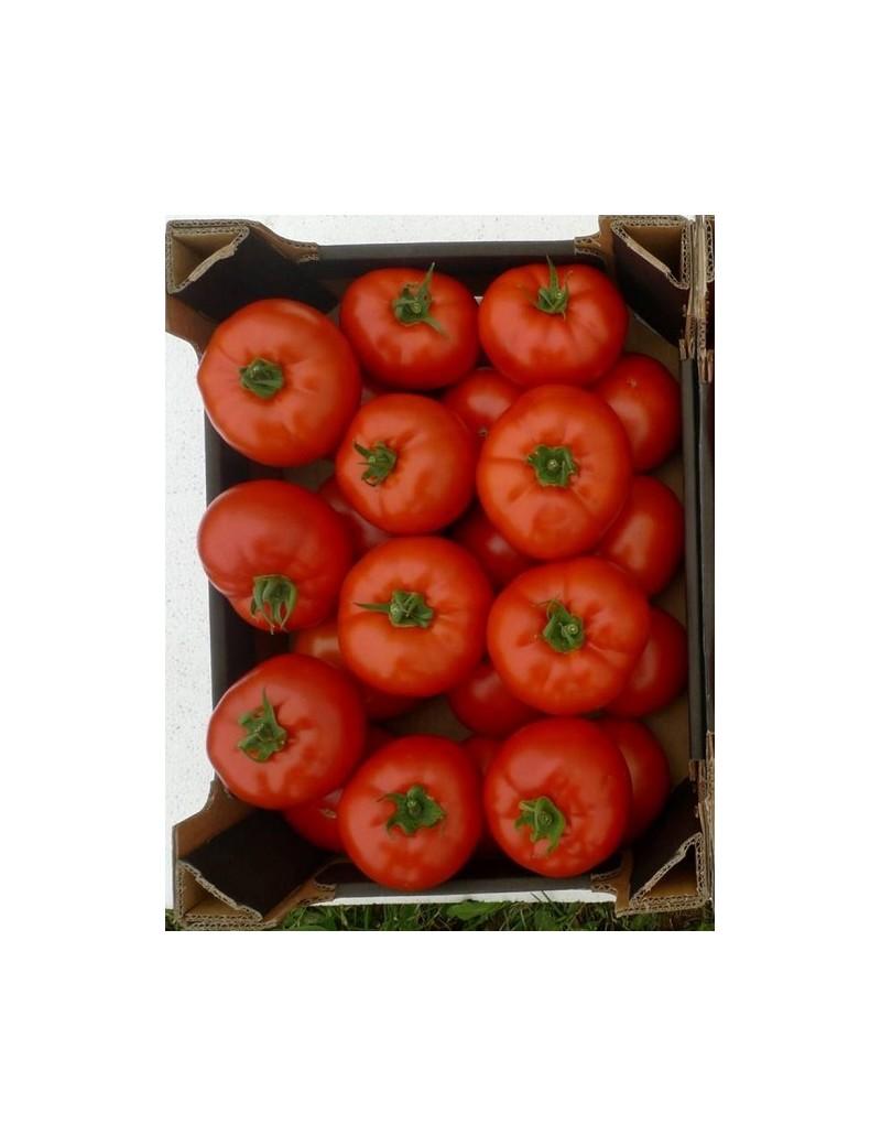 Pomidor EURASIA 250 nasion ZW  ST