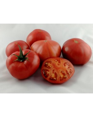 Pomidor FUCHSIA 250 nasion...