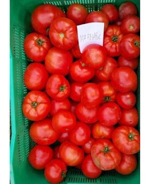 Pomidor MARACANA 500 nasion...