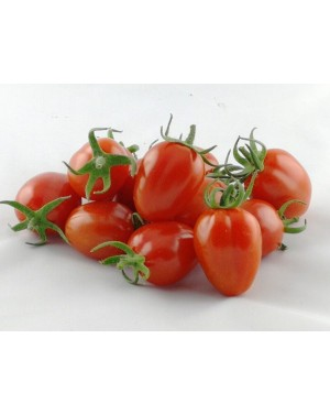 Pomidor NICOLETA (142/520)...