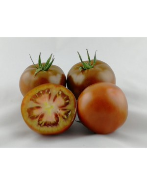 Pomidor SACHER 100 nasion...