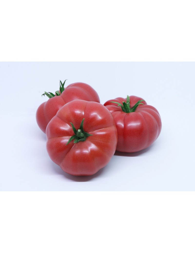 Pomidor SONAROSA 250 nasion ZW  ST