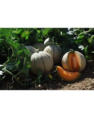 Melon ENDURO 250 nasion ZW  ST