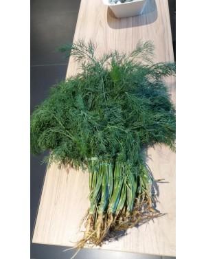 Koper CERES 5 kg nasion ZW  ST