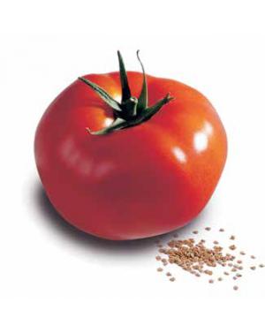 Pomidor SARNIA 100 nasion...