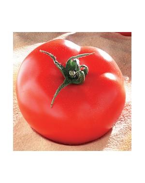 Pomidor BROOKLYN  500...