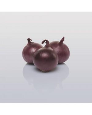 Cebula RED BARON 250.000 nasion ZW  ST