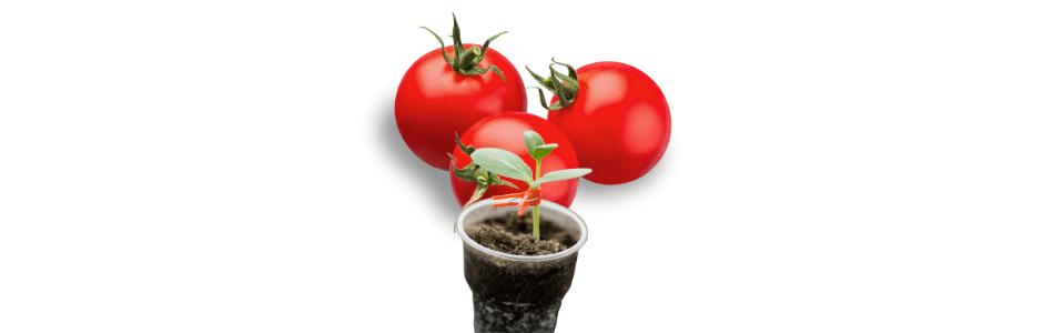 podkładka do pomidora