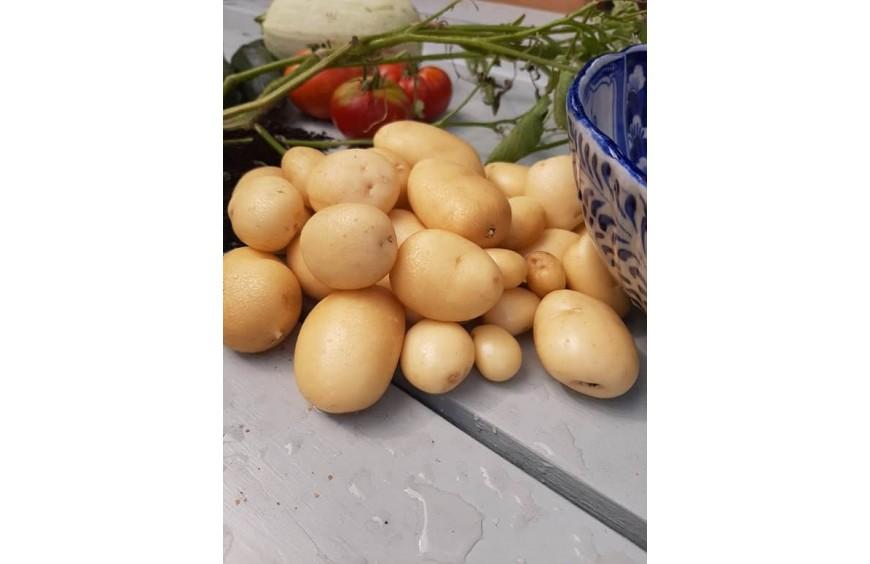 Ziemniaki z nasion- zupełna nowość na rynku !